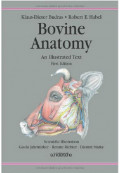 Bovine Anatomy: An Illustrated Text