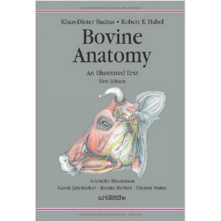 Bovine Anatomy Second Extended Edition