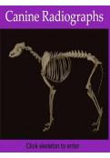 Canine Radiographs [Slideshares]
